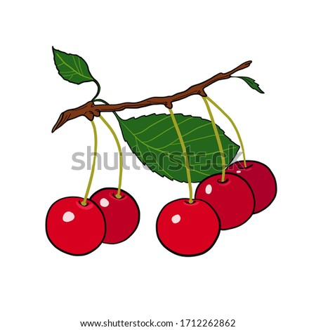 drawing of cherries on a branch