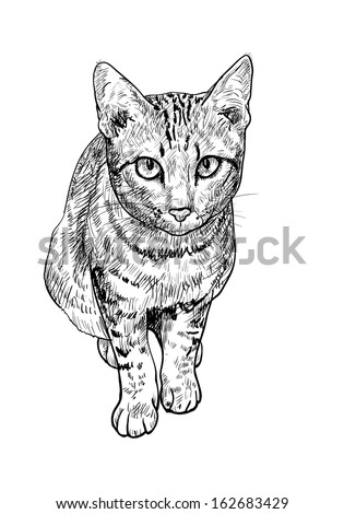 drawing of curious cute cat on sitting pose stock vector
