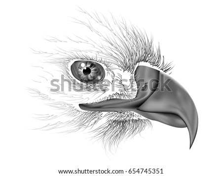 drawing of eagle eye close up