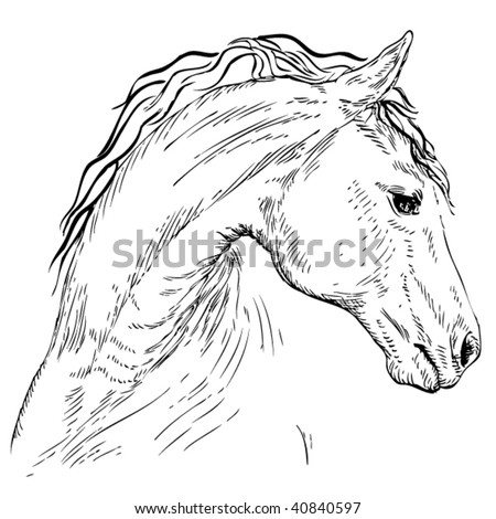 Drawing of the horse
