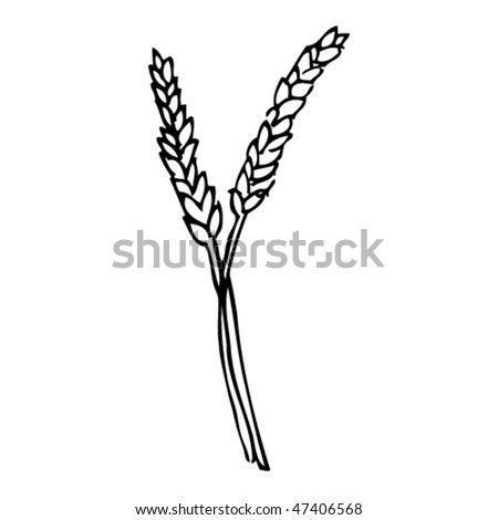 drawing of wheat or corn
