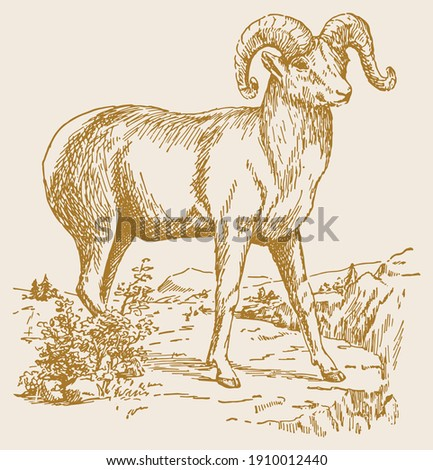 drawing or sketch of indian big