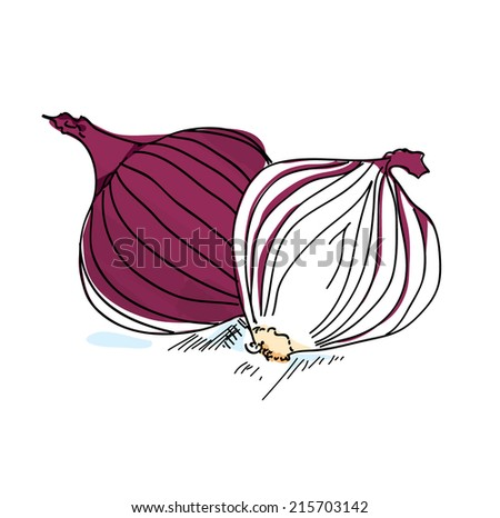 Sliced Onions Drawing Red Sliced Onion Vector