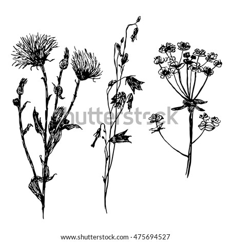 drawing set meadow and field flowers, hand-drawn sketch vector illustration #475694527