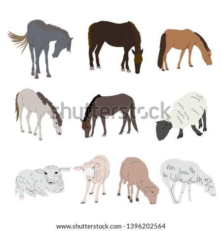 drawing set of horse and sheep