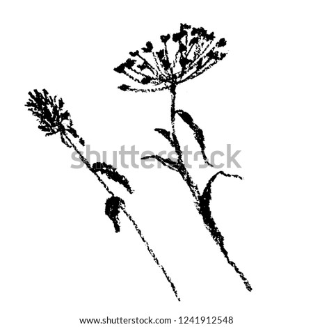 drawing, set of two botanical illustrations of field plants, charcoal sketch, hand-drawn vector illustration. good for decor and prints