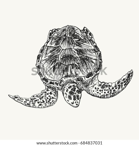 Drawing sketch of sea turtle swimming under water. Wild turtle hand drawn illustration
