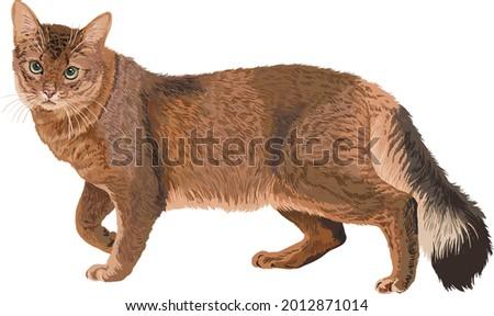 drawing somali cats, art.illustration, exotic cat, vector Zdjęcia stock ©