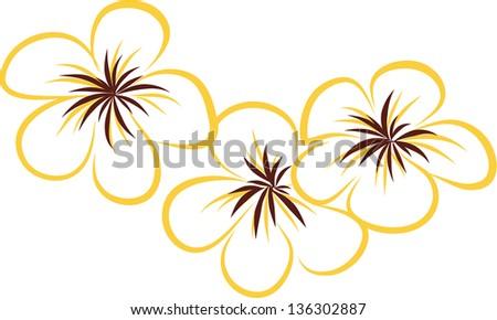 Plumeria Flower Line Drawing Drawing tropical plumeria