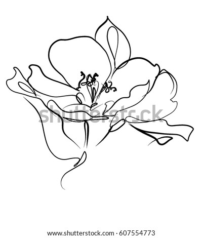Drawing vector graphics with floral pattern for design. Floral flower natural design. Graphic, sketch drawing. lily, tulip.   #607554773