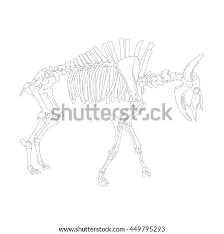 Cow Skeleton Ez Canvas