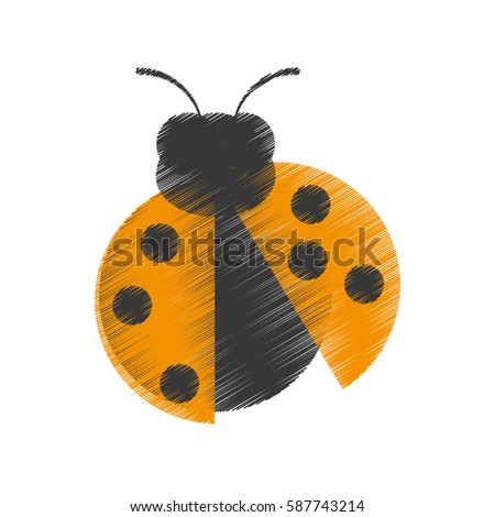 drawing yellow ladybug animal