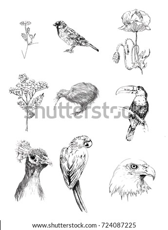 drawings of birds and plants