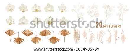 Dried lunaria flowers, orchid, pampas grass, tropical palm leaves vector bouquets. Pastel watercolor floral template isolated collection for wedding wreath, bouquet frames, decoration design elements