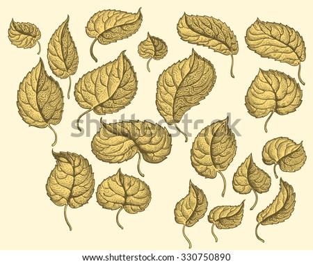 dry autumn leaves design set