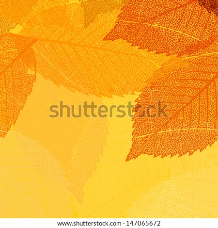 dry autumn leaves template eps