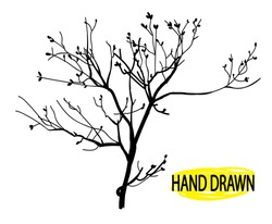 Dry branch. Tree branch without leaves. Drawing by hand in vintage style, drawing pen.
