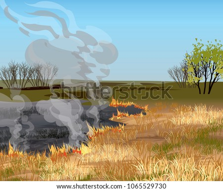 dry grass field in fire vector