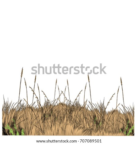 dry grass sketch vector