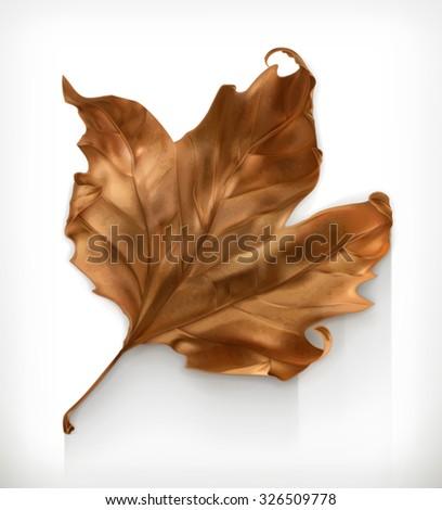 dry maple leaf  autumn vector