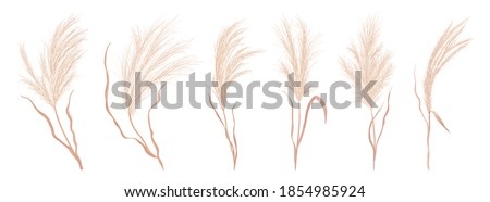 Dry pampas grass vector set. Watercolor field autumn design elements. Boho fall illustration of dried plant for decoration, frame, backdrop, fabric print, retro textile, wallpaper, wedding card