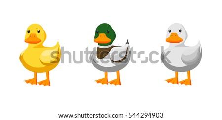 ducks different kind of ducks
