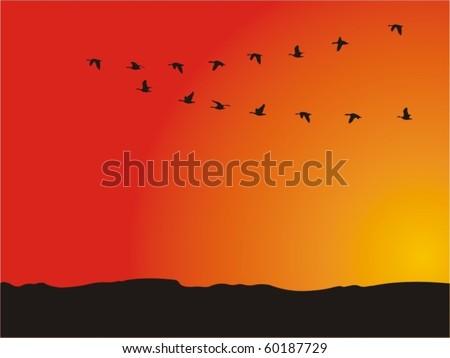 ducks flying away