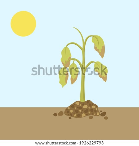 Dying plant. Dry plant. Vector illustration Photo stock ©