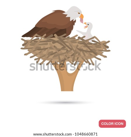 eagle and chick in the nest