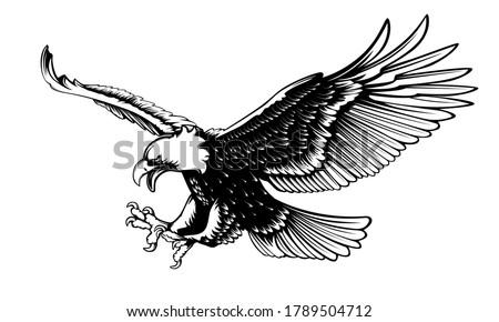 Eagle emblem isolated on white vector illustration. World symbol of freedom. Retro color logo of falcon. Eagle detailed logo.