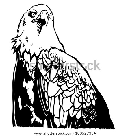 eagle hand drawing vector
