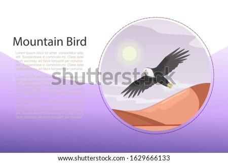 eagle  landscape with flying