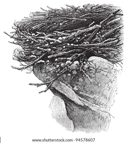 eagle nest   vintage
