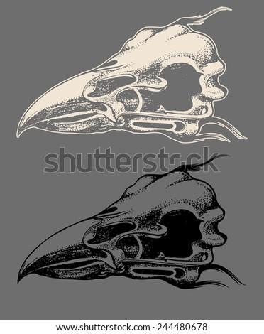 stock-vector-eagle-skull-hand-draw-with-