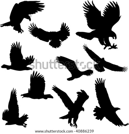 Eagle vector collection set