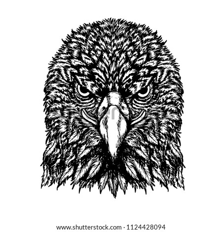 eagle vector drawing on white