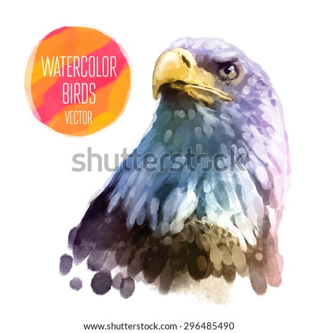 eagle watercolor  bird isolated