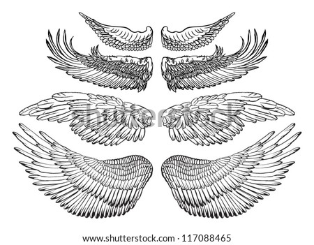 Eagle wings - vector drawing  Eagle Wing Drawing