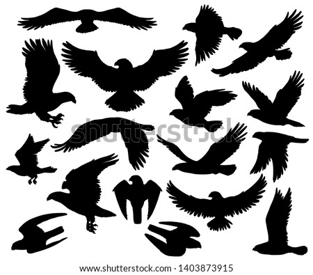 Eagles, falcons and predatory birds heraldry silhouettes. Vector isolated heraldic coat of arms symbols of vultures and hawks, flying birds of prey and bald eagle, falconry or falcon hunt