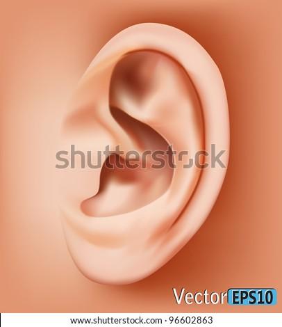 Ear closeup.vector