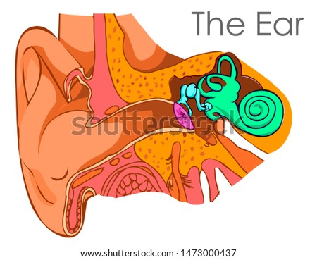 ear diagram brush drawing