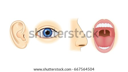 Ear Eye Nose and Mouth in vector style isolated on white. Illustration about human sensation.