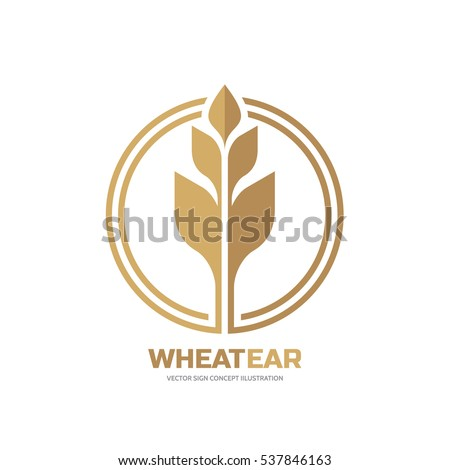Ear of wheat - vector logo template creative illustration. Cereal organic sign. Ecology symbol. Bio nature insignia. Agriculture concept. Design element.