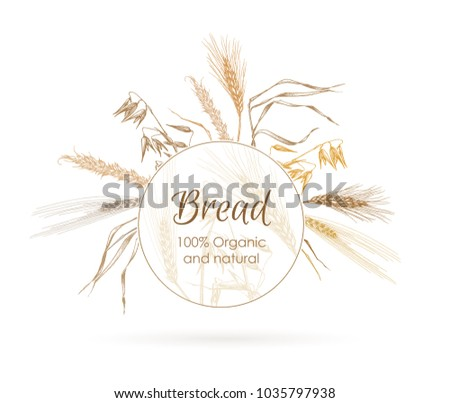 ears of rye and wheat  and
