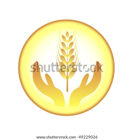 ears of wheat and hands