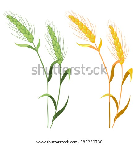 ears of wheat in green and gold