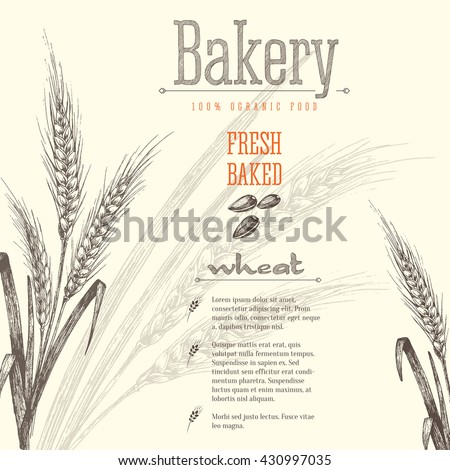 Ears of wheat isolated vector sketch hand drawn illustration, bakery shop background with ears of wheat, title and text layout.