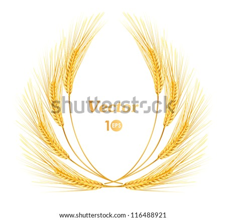 Ears of wheat. Vector eps 10.
