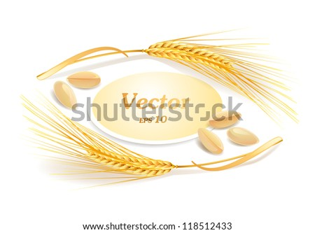 Ears of wheat. Vector eps 10.