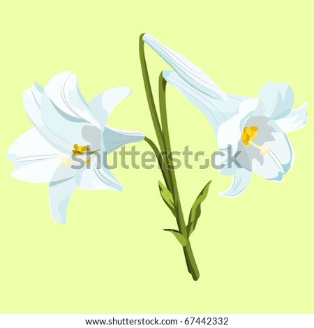 images of easter lilies. stock vector : Easter lilies